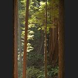 redwood doorway