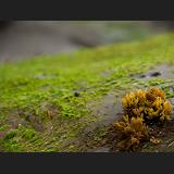 the mossy rock coexists with the vibrations of opera